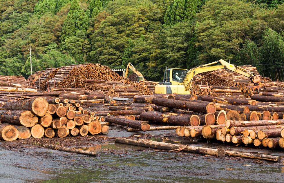 photodune-PfNfzGkB-lumber-yard-with-stacked-lumber